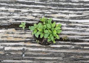 green-plant-wood-4711