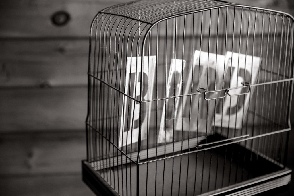 black-and-white-bird-birdcage-cage