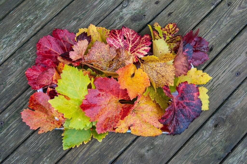 autumn-238322_1280