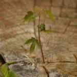 growth-615750_1280