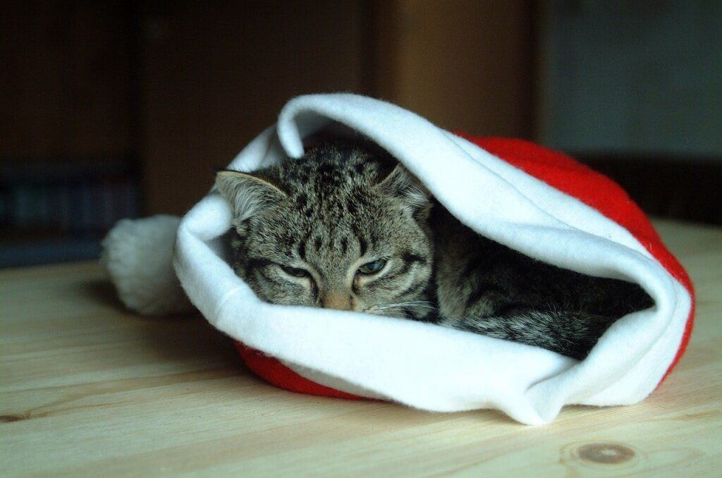 hat-christmas-1091575_1280