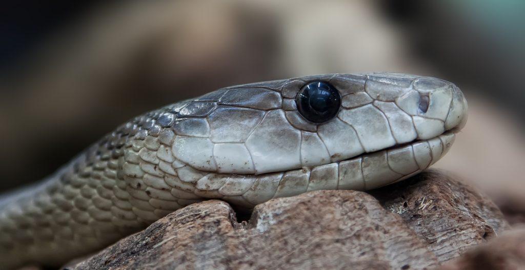 snake-653644_1920